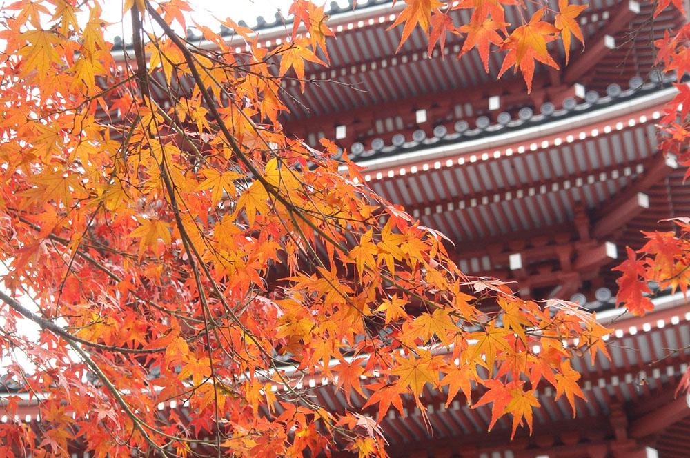 神亀元年に開創 宗教法人竹林寺